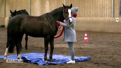 Start UP Sat1 Pferde-Challenge