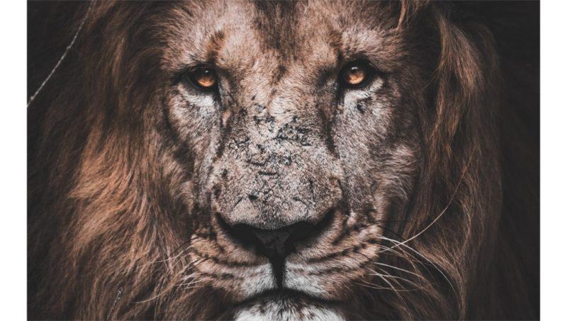 Die Höhle der Löwen
